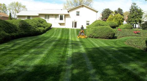Why Is it So Difficult to Find Top-Notch Lawn Care Companies?